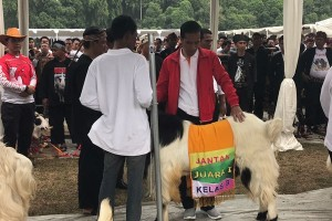 Presiden pamerkan hasil ternak