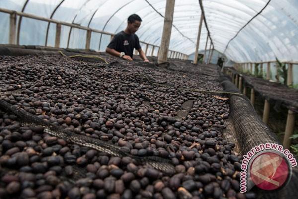 Limbah kopi bisa jadi bahan bakar?