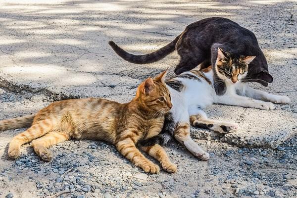 Pecinta hewan selamatkan binatang liar di Baghdad via daring