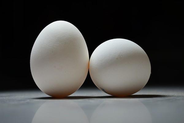 Permalink to Peneliti Jepang tumbuhkan obat dalam telur ayam
