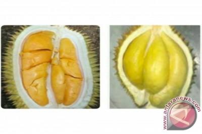 Pengelolaan SDG durian lokal sebagai benteng pelestarian