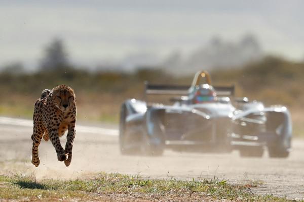 Adu cepat mobil listrik Formula E dengan Cheetah, siapa menang?