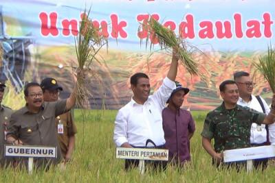 Produksi padi terus, Jawa Timur surplus