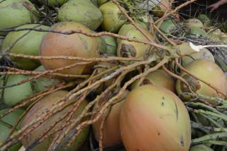Warga Garut manfaatkan Ramadhan untuk berjualan kelapa