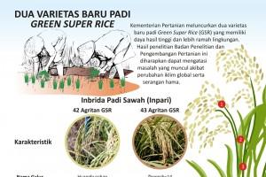 Dua Varietas Baru Padi Green Super Rice