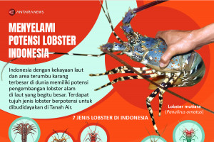 Menyelami potensi lobster Indonesia