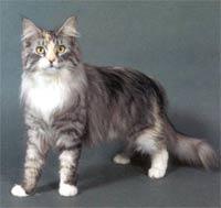 Peluang Bisnis Baru: Beternak Kucing