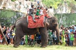Tarik Tambang Gajah Lawan 20 Orang Batal