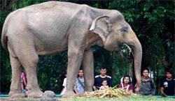 40 Hektare Untuk Gajah