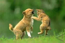 Anjing Lebih Pintar Daripada Kucing - AntaraNews.com
