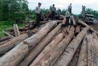 FPLH Laporkan Kasus Illegal Logging kepada Presiden SBY