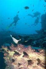 Biota Laut Maluku Tenggara Rusak Parah
