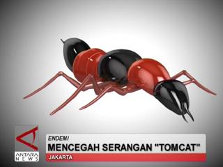 Mencegah Serangan Tomcat